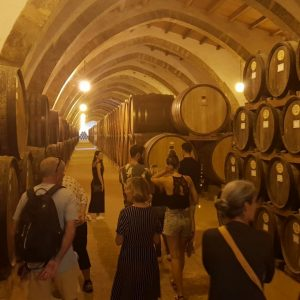 sicily private tour - best things to do in Sicily - wine tours